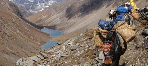 Trekking in Bhutan Lasttiere